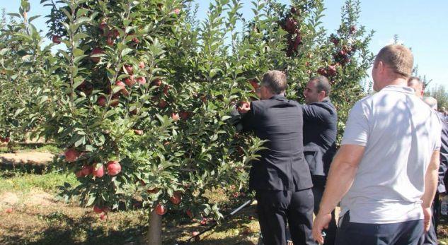 Ky është qyteti që ofron punë për mbledhjen e mollave